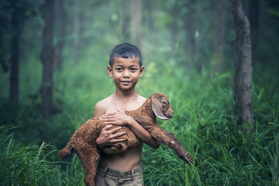 Vivere vegan si può, per gli animali e non solo!